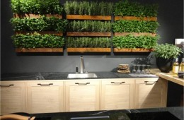 MEDICINAL PLANTS kitchan